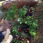 Beet-harvest2