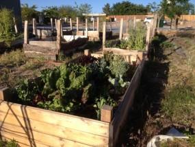 The Winn Community Garden - One plot for each class.