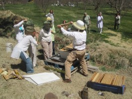 Workshop - Backyard Beekeeping