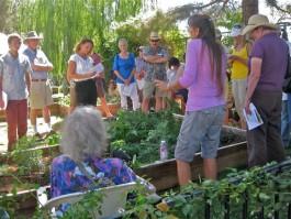 The Medicinal Herb Garden