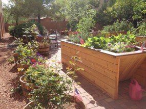 Planters with plants