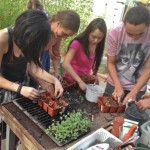 transplanting-starts2