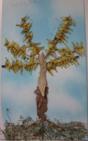 Tree Collage - seeds, bark, leaves